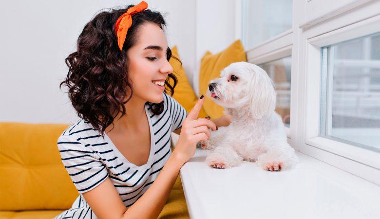 Imobiliária Habitar Pets